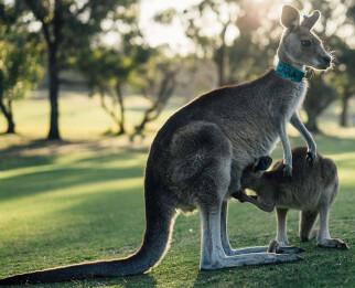 Природные достопримечательности Австралии