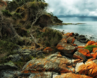 Интересные факты о Тасмании